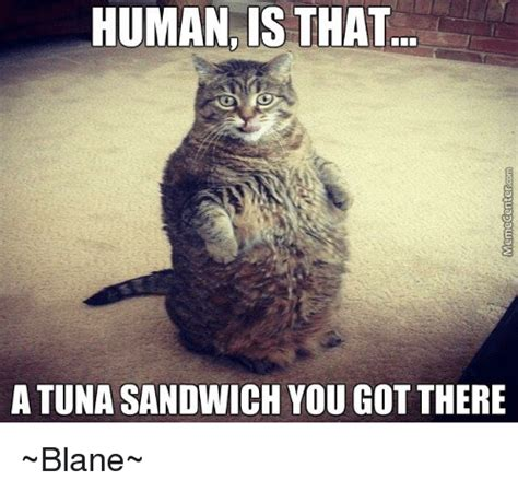 Tuna Sub Meme - human is that a tuna sandwich yougot there blane meme