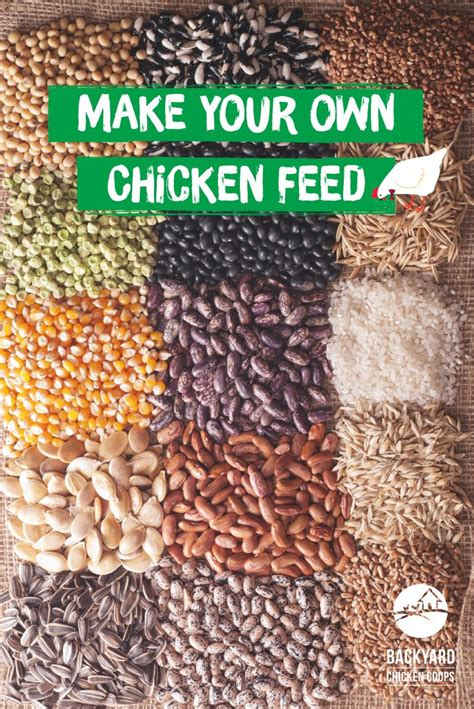 what to feed backyard chickens 25 best ideas about chicken feed on raising