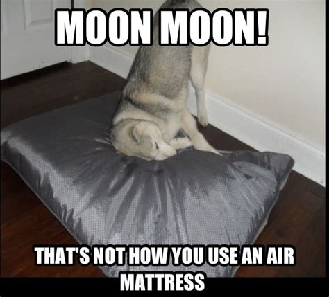 Moon Moon Memes - i love moon moon memes the saga of moon moon pinterest