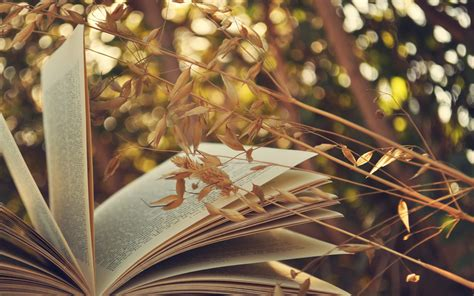 book walpaper book full hd wallpaper and background 2880x1800 id 451041