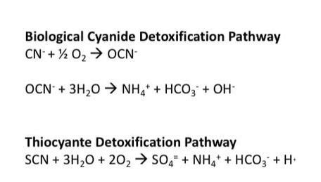 Cyanide Detox by Posts Biological Waste Treatment Expert
