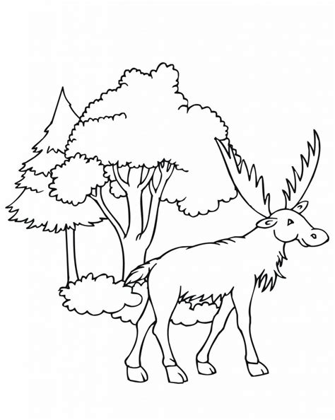 coloring book pages moose free printable moose coloring pages for kids