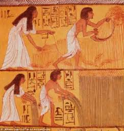 Fishing Wall Murals were the ancient egyptians vegetarian carbon analysis