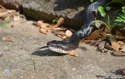 Snake In The Backyard What To Do eliminating snakes in your yard the national wildlife federation