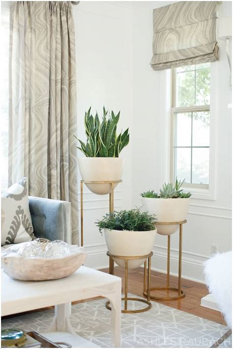 amazing ideas  display  indoor plants