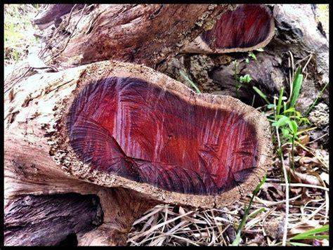 Cocobolo Wood Coasters les 19 meilleures images 224 propos de wood sur