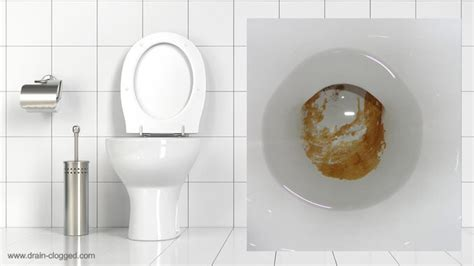 Bathroom Sink Bowls by Urine Scale In A Toilet How To Remove Limescale From Toilets