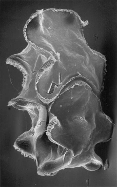 University of Saskatchewan Archives - Marine Invertebrate
