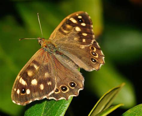 casa delle farfalle montegrotto la casa delle farfalle di montegrotto albumviaggi