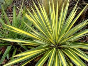 des plantes exotiques rustiques pour votre jardin le