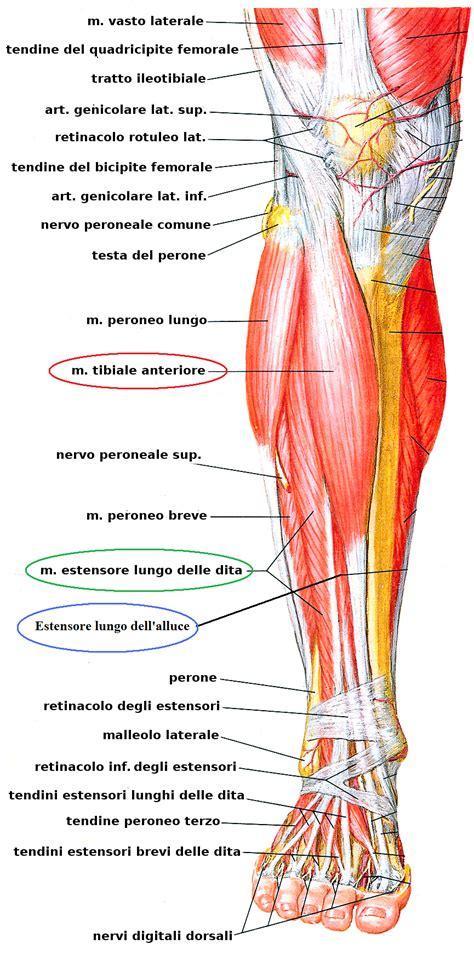 formicolio alle gambe da seduto il mio medico gli esercizi per il dolore alle gambe