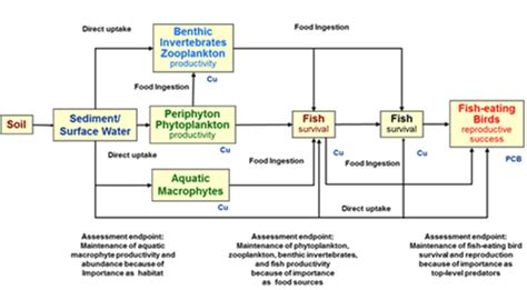 conceptual site model template ecological risk assessment of chemically and
