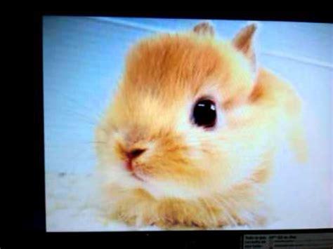 imagenes de ojos tiernos fotos de conejos tiernos youtube