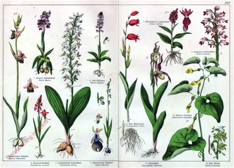 lista di fiori tipi di fiori elenco verzameling in beeld serie dr g h