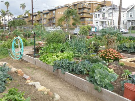 What Is A Community Garden by How To Start A Community Garden Bonnie Plants