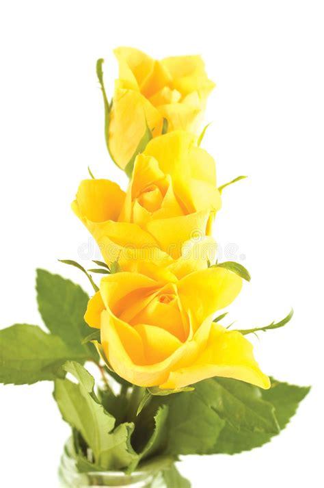 immagine mazzo di fiori mazzo di fiori immagine stock immagine di estate yellow