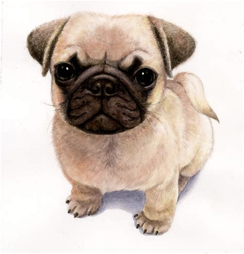 pug animation animated pug