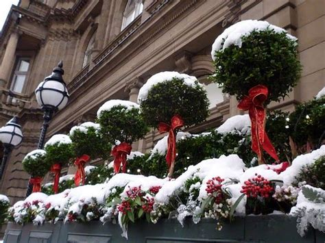 18 best images about window boxes in edinburgh on