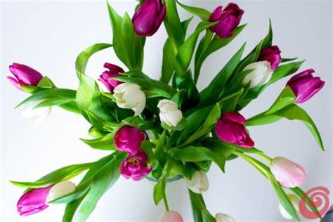 come piantare i tulipani in vaso il fiore mese gennaio il tulipano casa e trend