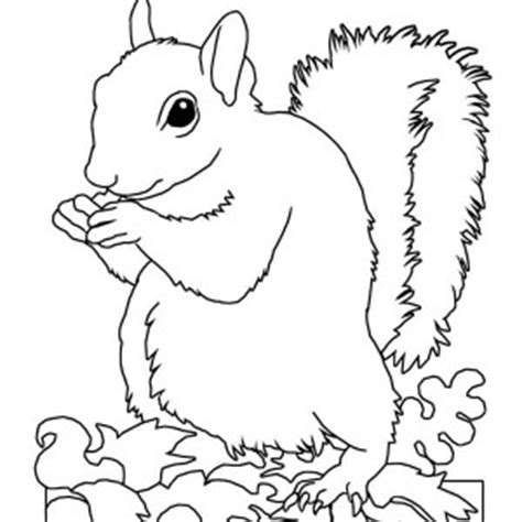 realistic squirrel coloring page download online coloring pages for free part 57