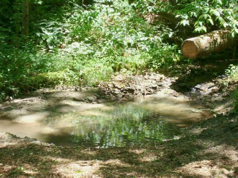 Stoney Asheville Nc by Stoney Creek Cabin Vacation Rental Asheville Nc 3