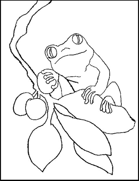 Coloring Book Red Eyed Tree Frog Eyed Tree Frog Coloring Page