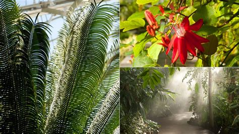 Discount Tropical Paradise At The New York Botanical New York Botanical Garden Discount