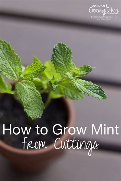 hardest plant to grow 25 gorgeous growing mint ideas on pinterest mint plant