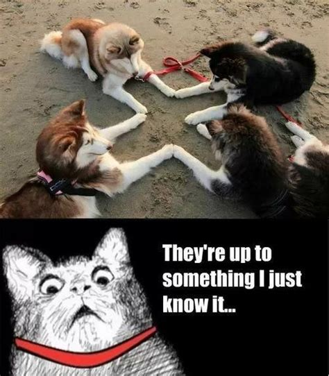 Dog And Cat Memes - animals cats dogs meme animals pinterest beautiful