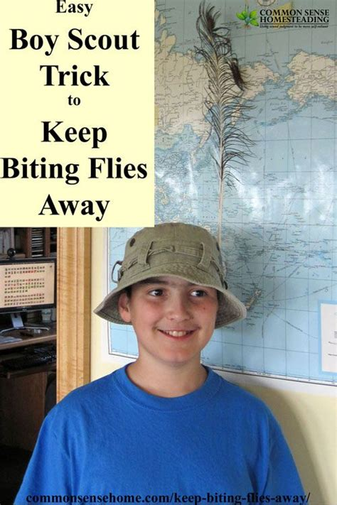 how to keep flies away from backyard 25 best ideas about deer flies on pinterest deer information natural fly repellant and black fly