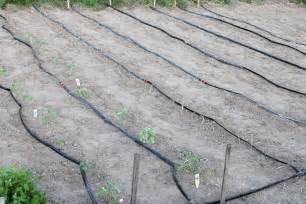 Backyard Irrigation System Gator 100 Drip Irrigation Kit Drip Irrigation Parts And