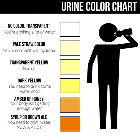 color of urine chart urine color chart what color is normal what does it