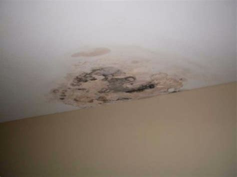 Mildew On Ceiling Cause by Expert Mold Remediation In Oakville And Mississauga