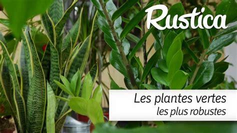 Plante Interieur Facile by Les Plantes Vertes Les Plus Faciles
