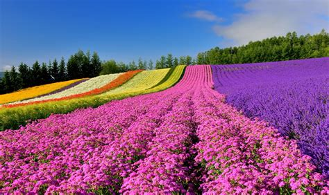 How To Build Kitchen Island by 8 Must See Flower Spots In Hokkaido All About Japan