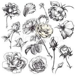 best 25 flower illustrations ideas on pinterest flower