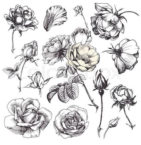 best 25 rose illustration ideas on pinterest typo uk
