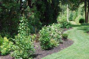 Landscape Shrubs Pictures Shrub Garden Maitland Garden Of