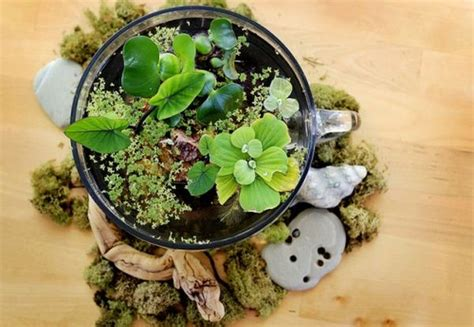 Terrarium Coffee Table by Make Your Own Beautiful Terrarium 10 Inspiring Ideas