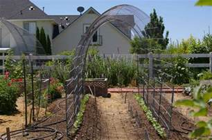 simple arched trellis for grapes or pole beans