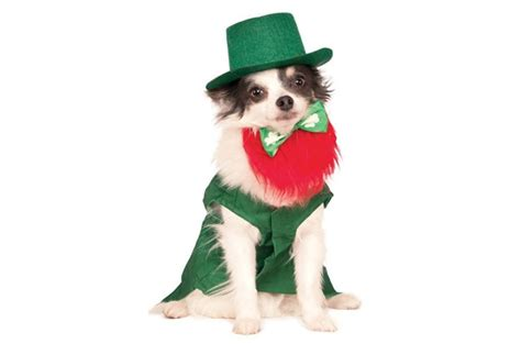 Dont Miss The Best Canine Costumes Onpeoplecom by Top 10 Grand St S Day Gifts For Setters