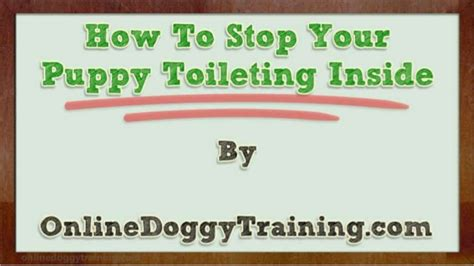 how to stop a from indoors how to stop your puppy toileting inside tips