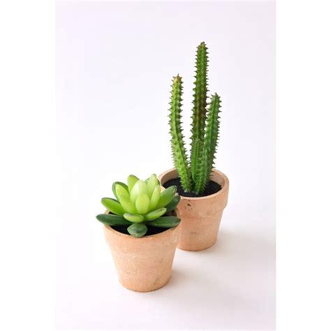 Mini Cactus image gallery mini cactus