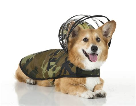raincoat for dogs pered pooches get raincoats with detachable hoods deadline news