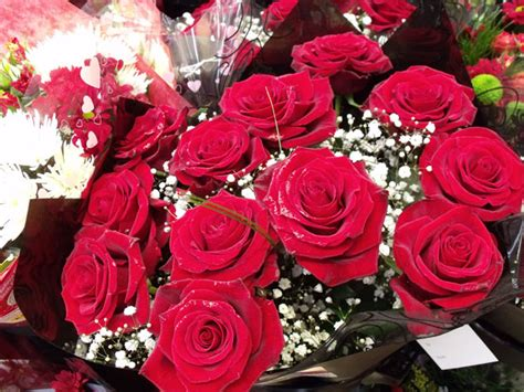 valentines day san jose roses for valentines day san jose plastic surgery info