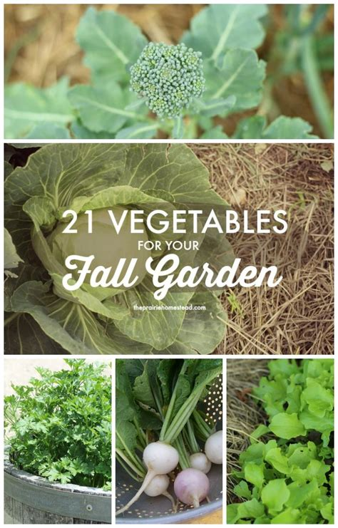 310 Best Images About Survival Gardening On Pinterest What Do You Need To Start A Vegetable Garden