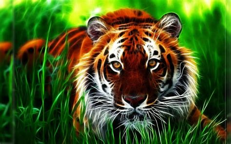 tiger  wallpaper wallpaper tiger wallpaper animal