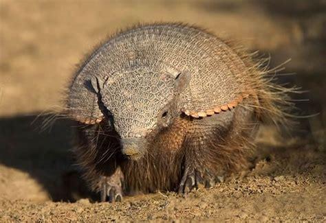 imagenes de animales del desierto imagenes de los animales del desierto imagui