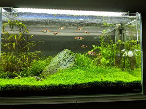Ada Aquascape - ada 60p iwagumi aquascape plantedtank