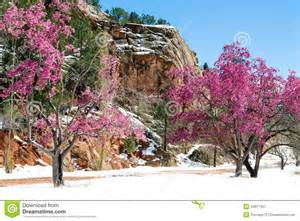 Business Cards Colorado Springs Cherry Blossom Trees At Red Rock Canyon Open Space Colorado Spri Stock Photo Image 54917457